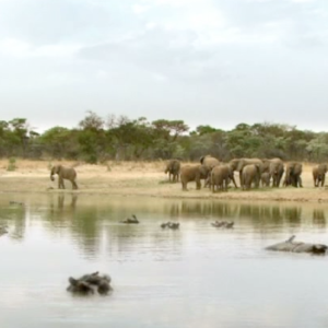 Finished commercial for Esso